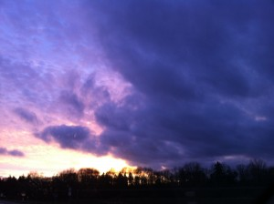 purple sky (foto by Ute Passionflower Apfelstedt)